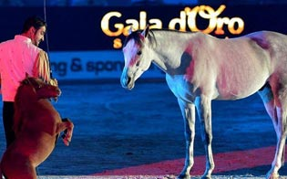 https://www.seguonews.it/gran-gala-equestre-al-palmintelli-in-citta-i-migliori-cavalli-e-artisti-circensi