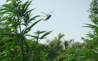 http://www.seguonews.it/scoperte-tremila-piante-di-cannabis-nel-nisseno-agricoltore-denunciato-dai-carabinieri