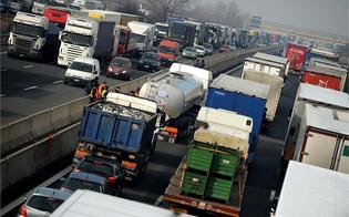 http://www.seguonews.it/riecco-bisonte-selvaggio-in-sicilia-sciopero-autotrasporti-dal-5-a-11-agosto