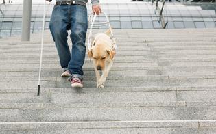 http://www.seguonews.it/unione-ciechi-e-ipovedenti-senza-fondi-tagliati-assistenza-e-servizi-per-125-mila-disabili-siciliani