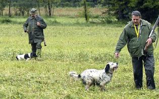http://www.seguonews.it/caccia-da-domani-si-spara-il-wwf-nisseno-al-questore-troppi-rischi-piu-controlli-sui-cacciatori