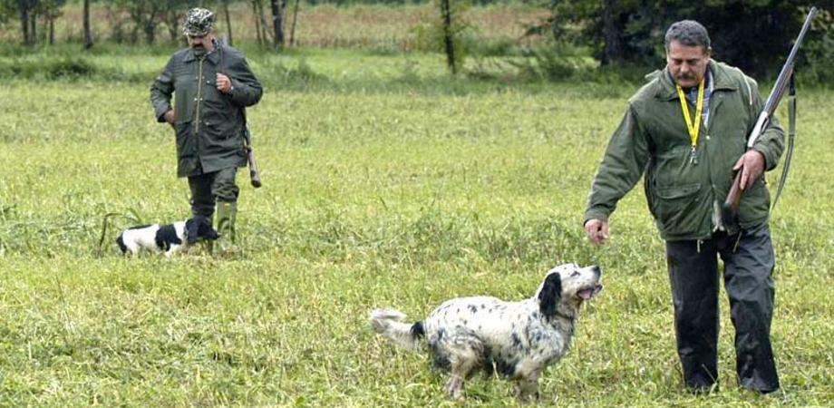 Falsificavano le ricevute di pagamento delle tasse: decine di cacciatori indagati in provincia di Caltanissetta