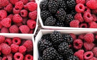 http://www.seguonews.it/epatite-a-casi-in-aumento-in-italia-il-virus-nei-frutti-di-bosco-congelati