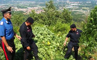 http://www.seguonews.it/coltivazioni-di-marijuana-fai-da-te-boom-nel-nisseno-arrestati-padre-e-figlio-due-donne-denunciate