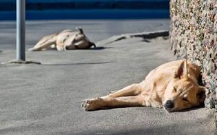 https://www.seguonews.it/randagismo-a-caltanissetta-disposta-la-cattura-dei-cani-aggressivi-segnalati-nei-giorni-scorsi