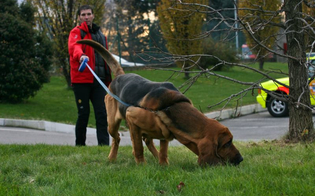http://www.seguonews.it/in-sicilia-scomparse-2-400-persone-i-familiari-urge-legge-regionale-e-cani-molecolari-nelle-questure