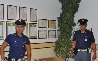 http://www.seguonews.it/piantagione-di-marijuana-a-niscemi-il-cane-fa-scoprire-il-padrone-arrestato