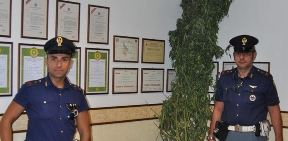 Piantagione di marijuana a Niscemi, il cane fa scoprire il coltivatore: arrestato