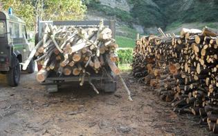 http://www.seguonews.it/rubavano-7-quintali-di-legna-nel-bosco-tre-denunce-nel-nisseno