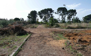 http://www.seguonews.it/gli-alberi-tagliati-dal-parco-dubini-wwf-e-legambiente-promettono-battaglia-dopo-linchiesta-archiviata