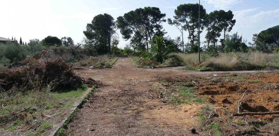 Gli alberi tagliati dal parco Dubini: Wwf e Legambiente promettono battaglia dopo l'inchiesta archiviata