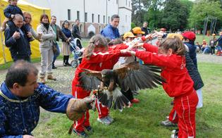 http://www.seguonews.it/caltanissetta-e-il-casus-dei-falchi-animalisti-contro-spettacolo-sono-diseducativi