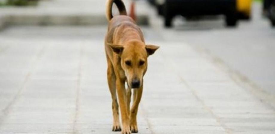 Ragusa: bimbo azzannato alla gola da un cane randagio, ricoverato
