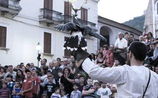 http://www.seguonews.it/i-falconieri-del-re-rapaci-selvatici-rispettati-cosi-scongiuriamo-lestinzione