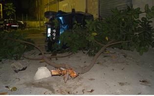 http://www.seguonews.it/lauto-piomba-contro-albero-conducente-positivo-alla-cocaina-lamico-crea-il-caos-al-santelia-denunciati
