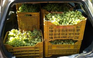 http://www.seguonews.it/furto-duva-in-un-vigneto-del-nisseno-ladri-bloccati-con-30-kg-di-frutta-dai-carabinieri