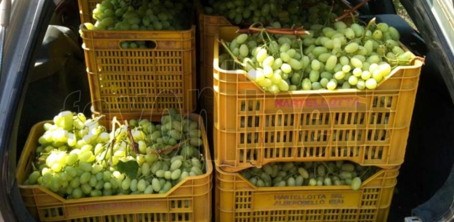 Butera: rubavano 5 quintali di Uva Italia, tre persone arrestate