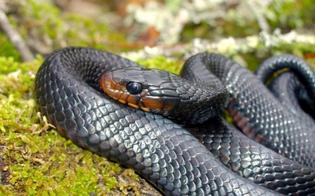 https://www.seguonews.it/curiosita-meccanico-nisseno-apre-il-cofano-e-trova-serpente-ma-il-rettile-e-sparito