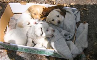http://www.seguonews.it/triste-mini-record-a-caltanissetta-in-una-mattina-14-cuccioli-abbandonati-in-diverse-zone