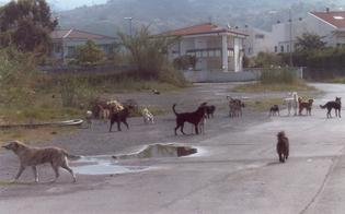 https://www.seguonews.it/randagismo-mdc-incontra-lassessore-piu-controlli-sui-trasgressori-creare-area-di-sgambamento-per-i-cani