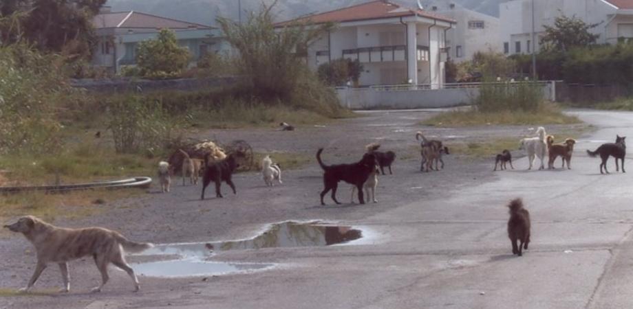 """Randagismo, Mdc incontra l'assessore: """"Più controlli sui trasgressori, creare area di sgambamento per i cani"""""""