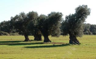http://www.seguonews.it/ulivi-secolari-nella-ss-640-il-pd-centro-storico-chiede-di-adottare-le-piante-donate-gratuitamente-dalla-ditta