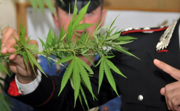 San Cataldo, piante di marijuana e foglie pronte per essere vendute: 20enne arrestato