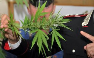 http://www.seguonews.it/san-cataldo-piante-di-marijuana-e-foglie-pronte-per-essere-vendute-20enne-arrestato