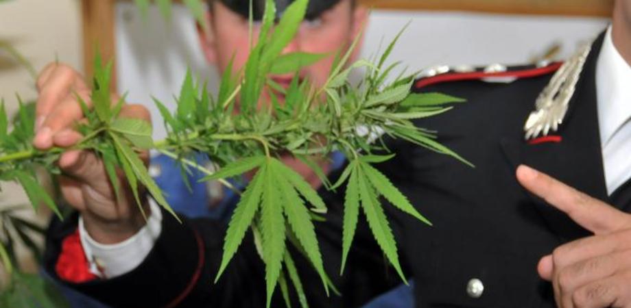 """Mini piantagione di """"erba"""" in camera da letto: denunciato giovane a Mazzarino"""