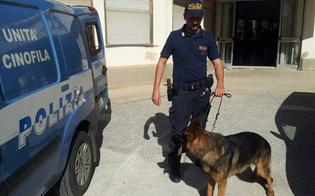 http://www.seguonews.it/nembo-cane-poliziotto-trova-22-grammi-di-droga-al-setaccio-due-scuole-superiori-di-caltanissetta