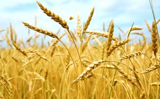 http://www.seguonews.it/presenza-di-glutine-nel-grano-saraceno-biologico-coop-e-un-errore-di-etichettatura