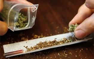 http://www.seguonews.it/riesi-nascondeva-sotto-limmondizia-300-grammi-di-marijuana-arrestato-un-24enne