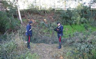 https://www.seguonews.it/rubavano-legna-in-area-demaniale-nisseno-carabinieri-arrestato-disoccupati