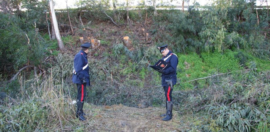 Rubavano legna in area demaniale del Nisseno, carabinieri arrestano due disoccupati