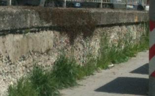 http://www.seguonews.it/terrore-in-via-de-cosmi-grosso-sciame-di-api-minaccia-i-residenti-del-quartiere