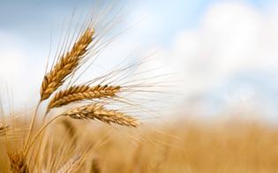 http://www.seguonews.it/il-sostegno-delleuropa-alla-filiera-cerealicola-lunedi-un-convegno-dellufficio-servizio-agricoltura