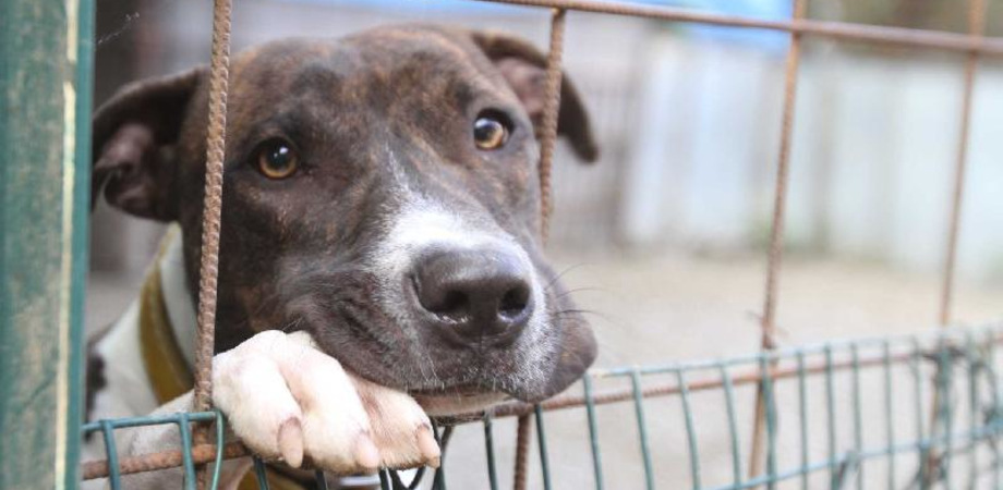 Cane pestato da due stranieri a Gela. Attivate le procedure per l'espulsione dall'Italia