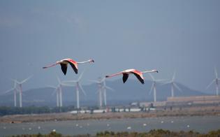 http://www.seguonews.it/no-eolico-gela-scende-in-piazza-contro-i-parchi-off-shore-vicini-alla-costa