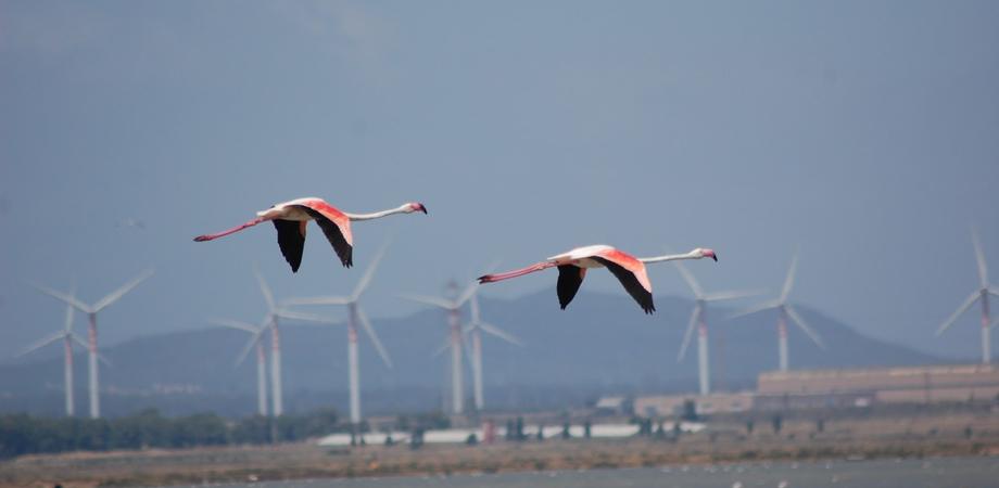 No eolico, Gela scende in piazza contro i parchi off-shore vicini alla costa