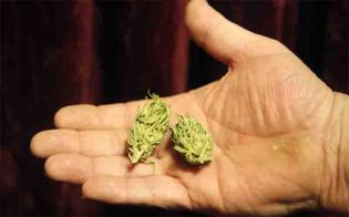 http://www.seguonews.it/caltanissetta-la-polizia-interviene-per-sedare-un-lite-e-trova-in-cucina-alcune-dosi-di-marijuana-denunciato-un-23enne