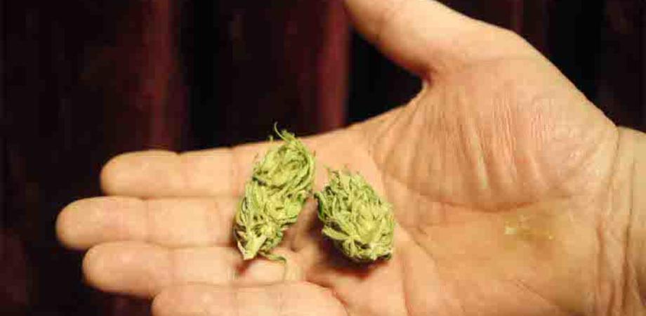 Caltanissetta, la polizia interviene per sedare un lite e trova in cucina alcune dosi di marijuana: denunciato un 23enne