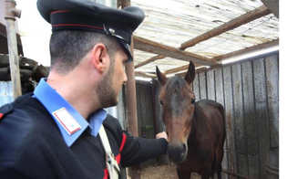 https://www.seguonews.it/morso-al-braccio-da-un-cavallo-giovane-di-gela-rischia-di-morire-dissanguato
