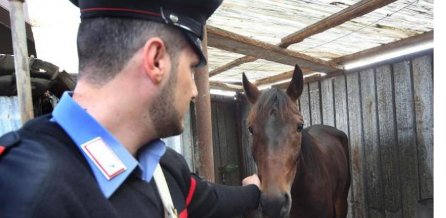 Morso al braccio da un cavallo, giovane di Gela rischia di morire dissanguato
