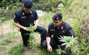 http://www.seguonews.it/scoperta-una-piantagione-di-marijuana-i-3-indagati-svolgevano-unattivita-a-conduzione-familiare