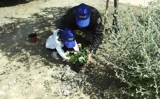 http://www.seguonews.it/un-albero-per-ogni-bambino-nato-o-adottato-nel-2015-san-cataldo-promuove-leducazione-civica-e-ambientale