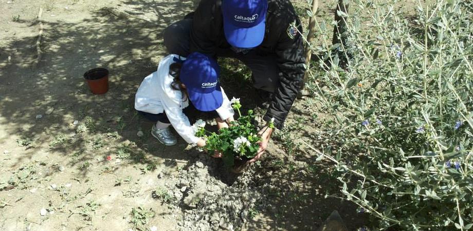 """""""Un albero per ogni bambino nato o adottato"""" nel 2015. San Cataldo promuove l'educazione civica e ambientale"""