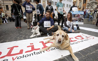 https://www.seguonews.it/basta-violenze-sugli-animali-il-2-agosto-a-caltanissetta-sfila-corteo-pro-4-zampe