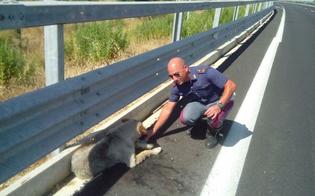 http://www.seguonews.it/randagio-travolto-da-auto-sulla-ss-640-salvato-dagli-angeli-della-polstrada-nissena