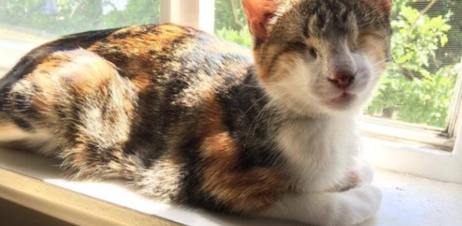 Honey Bee, la gattina cieca che commuove il web e gira il mondo con il padrone