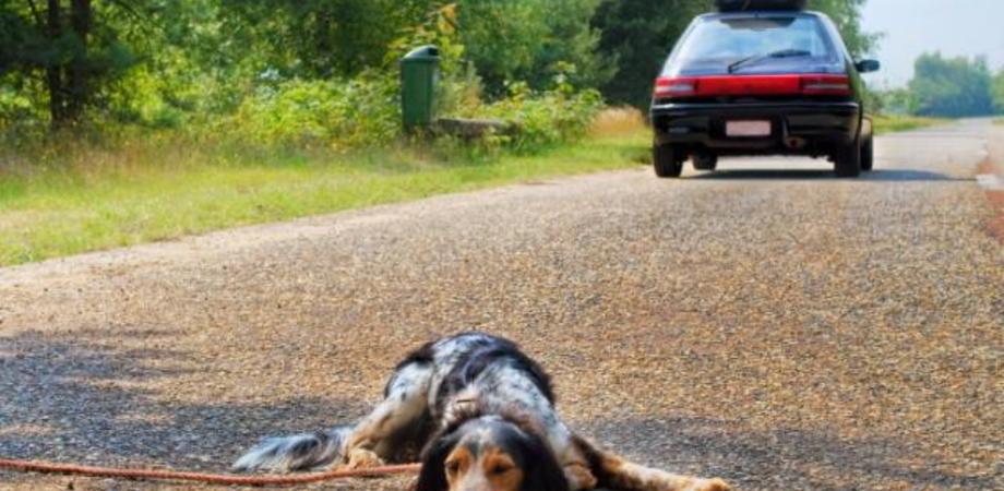 In calo gli abbandoni estivi di cani: Sicilia seconda nella lista nera con 459 casi